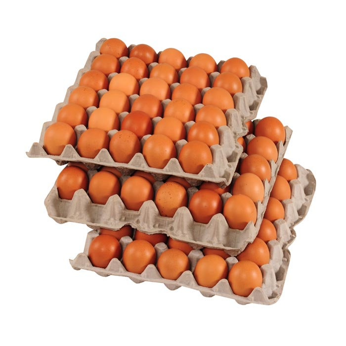 brown chicken eggs flats